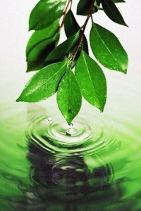 Nature iPhone Wallpapers 12